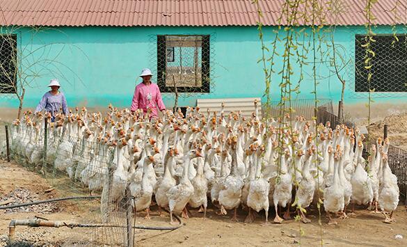特色养殖助农增收